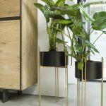Illustration Cinq contenants pour magnifier vos plantes
