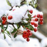 Illustration 5 conseils pour protéger son jardin gelé ou enneigé
