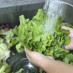 Illustration Comment conserver la salade plus longtemps