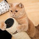 Illustration Griffoir pour chat: l'indispensable du matou heureux