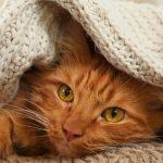 Illustration Comment protéger mon chat du froid ?