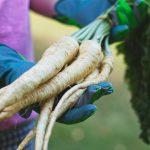 Illustration Pourquoi faire pousser des légumes oubliés dans son potager ?