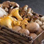 Illustration Les champignons, c'est de saison!
